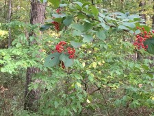 New Video on Improving the Health of Land - Recognizing Plants